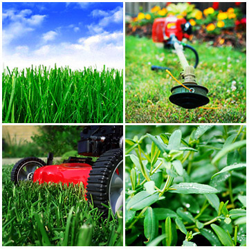 Commercial lawn care and landscaping neighbor boy for Commercial landscape maintenance